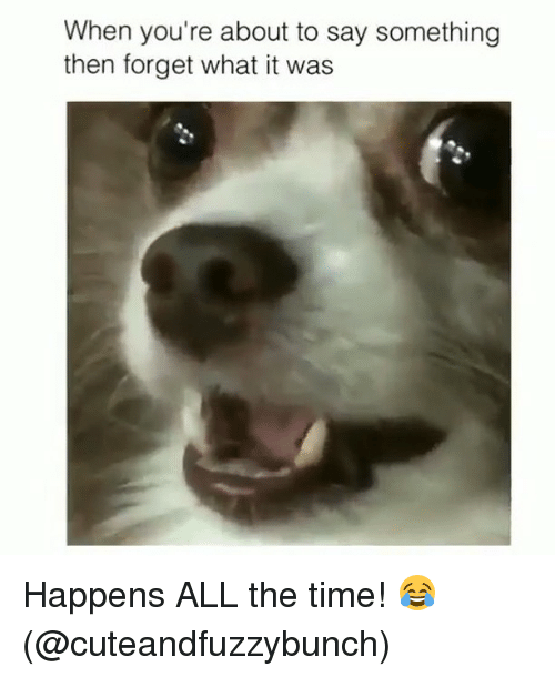 Memes, All the Time, and 🤖: When you're about to say something  then forget what it was Happens ALL the time! 😂 (@cuteandfuzzybunch)