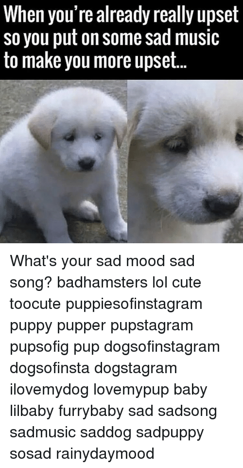 Memes, Music, and Pup: When you're already really upset  so you put on some sad music  to make you more upset. What's your sad mood sad song? badhamsters lol cute toocute puppiesofinstagram puppy pupper pupstagram pupsofig pup dogsofinstagram dogsofinsta dogstagram ilovemydog lovemypup baby lilbaby furrybaby sad sadsong sadmusic saddog sadpuppy sosad rainydaymood