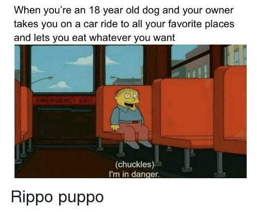 S And: When you're an 18 year old dog and your owner  takes you on a car ride to all your favorite place:s  and lets you eat whatever you want  (chuckles)  I'm in danger. Rippo puppo