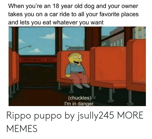 S And: When you're an 18 year old dog and your owner  takes you on a car ride to all your favorite place:s  and lets you eat whatever you want  (chuckles)  I'm in danger. Rippo puppo by jsully245 MORE MEMES