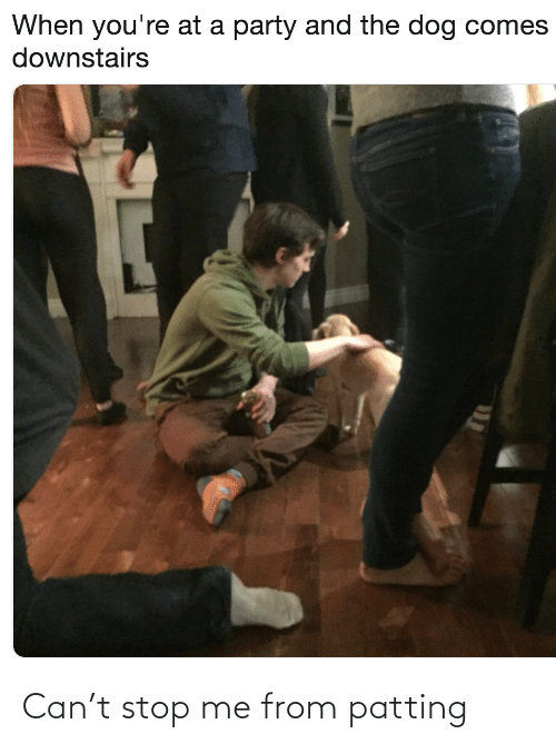 the dog: When you're at a party and the dog comes  downstairs Can't stop me from patting