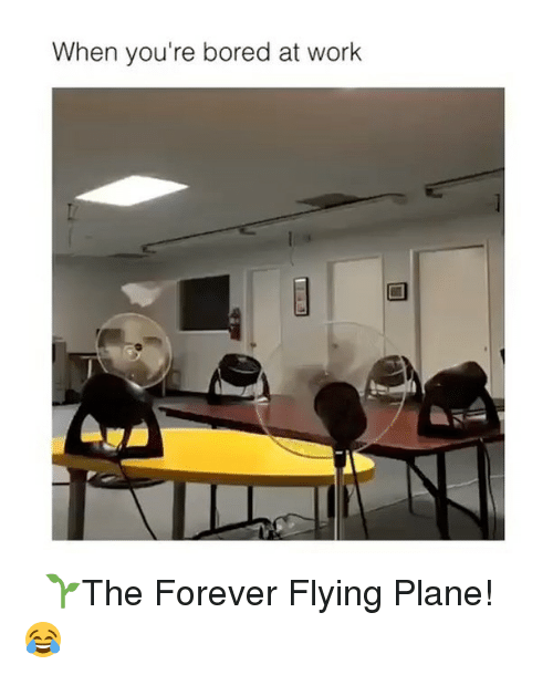 foreverly: When you're bored at work ⠀ 🌱The Forever Flying Plane! 😂