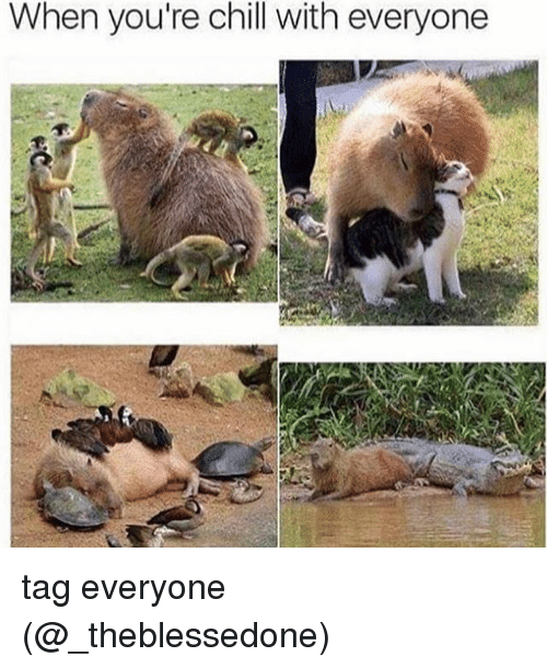 Chill, Memes, and 🤖: When you're chill with everyone tag everyone (@_theblessedone)