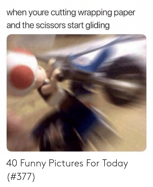 cutting: when youre cutting wrapping paper  and the scissors start gliding 40 Funny Pictures For Today (#377)