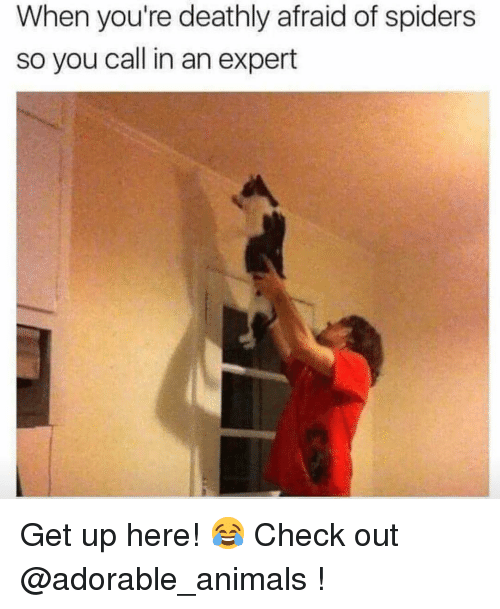 Afraid Of Spiders: When you're deathly afraid of spiders  so you call in an expert Get up here! 😂 Check out @adorable_animals !