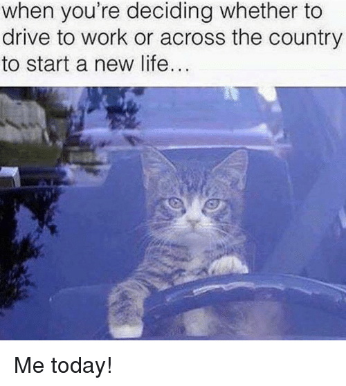 Life, Work, and Grumpy Cat: when you're deciding whether to  drive to work or across the country  to start a new life... Me today!