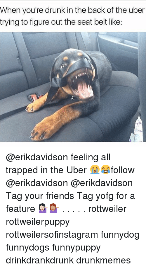 Belting: When you're drunk in the back of the uber  trying to figure out the seat belt like: @erikdavidson feeling all trapped in the Uber 😭😂follow @erikdavidson @erikdavidson Tag your friends Tag yofg for a feature 💁🏻💁🏽 . . . . . rottweiler rottweilerpuppy rottweilersofinstagram funnydog funnydogs funnypuppy drinkdrankdrunk drunkmemes