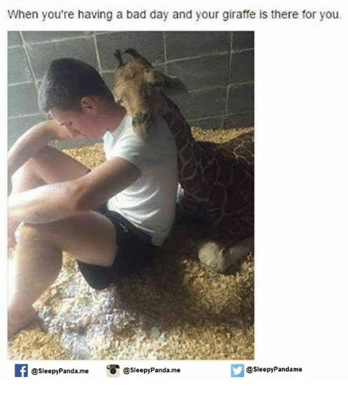 When Your Having A Bad Day: When you're having a bad day and your giraffe is there for you.  esleepy Panda me  @sleepy Pandame  @sleepy Panda. me