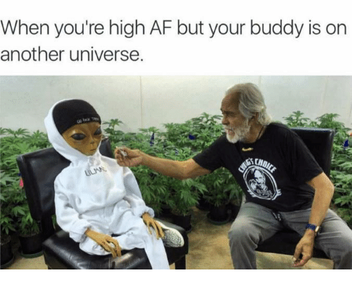 Funny Memes For When Your High : Funny af memes of on sizzle cats