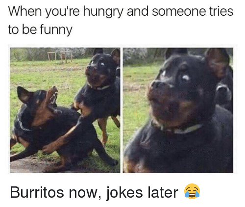 Funny Hungry Dog Pictures