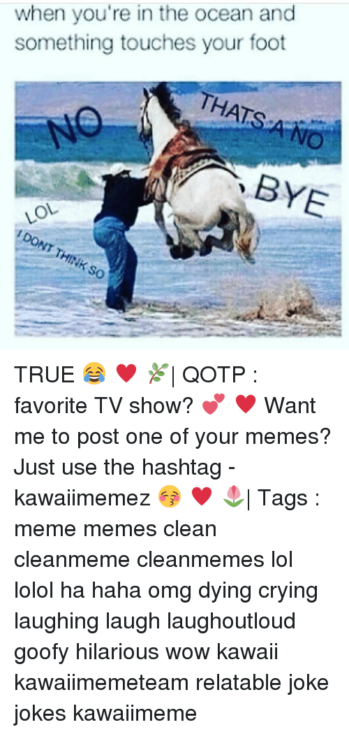 Haha Omg: when you're in the ocean and  something touches your foot  THATS  OL TRUE 😂 ♥ 🌿| QOTP : favorite TV show? 💕 ♥ Want me to post one of your memes? Just use the hashtag -kawaiimemez 😚 ♥ 🌷| Tags : meme memes clean cleanmeme cleanmemes lol lolol ha haha omg dying crying laughing laugh laughoutloud goofy hilarious wow kawaii kawaiimemeteam relatable joke jokes kawaiimeme