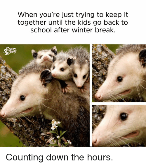 Dank, School, and Winter: When you're just trying to keep it  together until the kids go back to  school after winter break Counting down the hours.