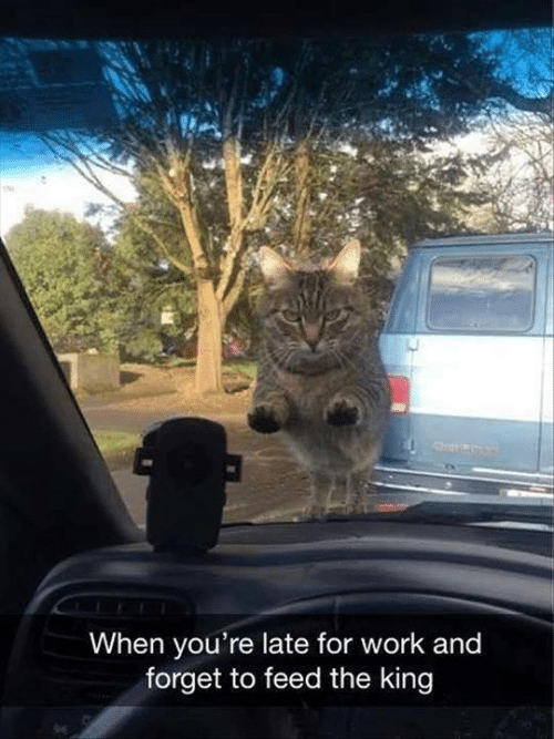 Late For Work: When you're late for work and  forget to feed the king