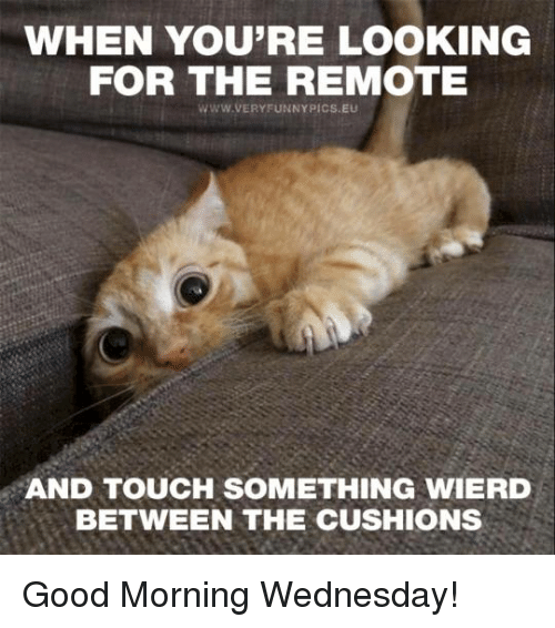 Good Morning Meme Wednesday : When you re looking for the remote very funny pics eu