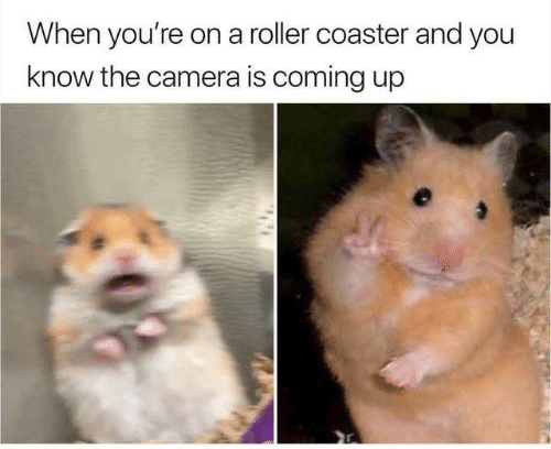 roller coaster: When you're on a roller coaster and you  know the camera is coming up