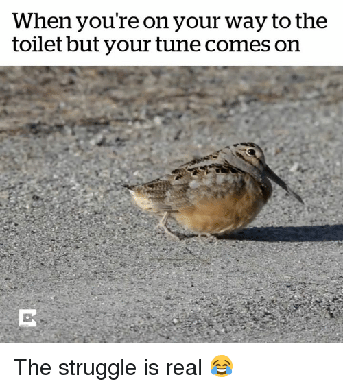 Struggle, The Struggle Is Real, and Tune: When you're on your way to the  toilet but your tune comes on The struggle is real 😂