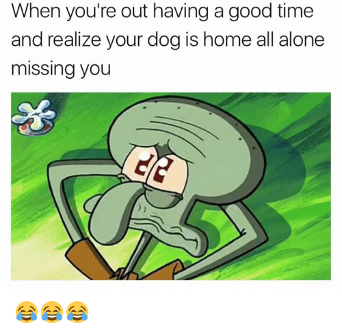 Being Alone, Good, and Home: When you're out having a good time  and realize your dog is home all alone  missing you 😂😂😂