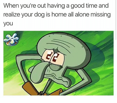 Being Alone, Memes, and Good: When you're out having a good time and  realize your dog is home all alone missing  you