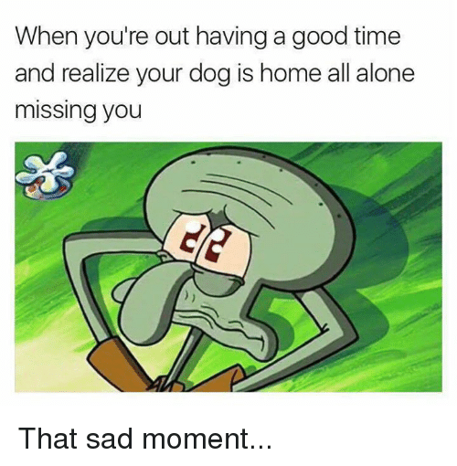 Being Alone, Memes, and Good: When you're out having a good time  and realize your dog is home all alone  missing you That sad moment...