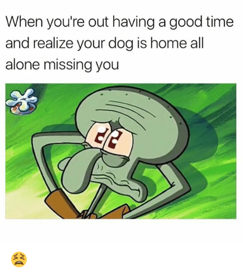 Being Alone, Memes, and Good: When you're out having a good time  and realize your dog is home all  alone missing you 😫
