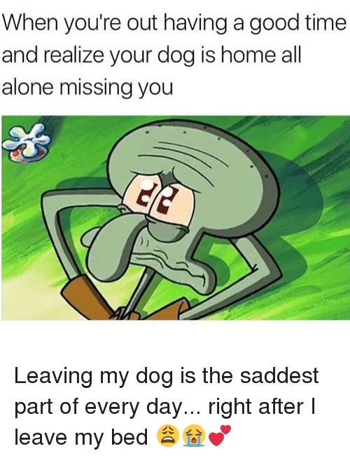 Being Alone, Memes, and Good: When you're out having a good time  and realize your dog is home al  alone missing you Leaving my dog is the saddest part of every day... right after I leave my bed 😩😭💕