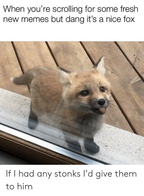 new memes: When you're scrolling for some fresh  new memes but dang it's a nice fox If I had any stonks I'd give them to him
