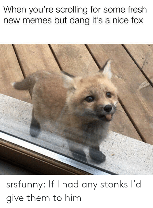 new memes: When you're scrolling for some fresh  new memes but dang it's a nice fox srsfunny:  If I had any stonks I'd give them to him