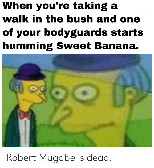 robert mugabe: When you're taking a  walk in the bush and one  of your bodyguards starts  humming Sweet Banana. Robert Mugabe is dead.