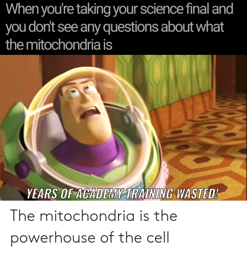 Mitochondria: When you're taking your science final and  you don't see any questions about what  the mitochondria is  YEARS OF ACADEMY TRAINING WASTED! The mitochondria is the powerhouse of the cell