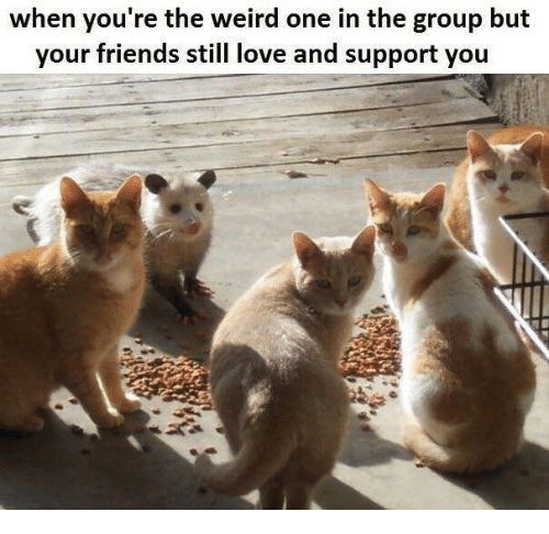 Friends, Love, and Weird: when you're the weird one in the group but  your friends still love and support you
