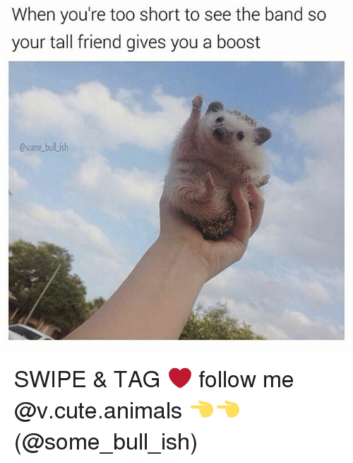 Tall Friend: When you're too short to see the band so  your tall friend gives you a boost  Csome bull ish SWIPE & TAG ❤️ follow me @v.cute.animals 👈👈 (@some_bull_ish)