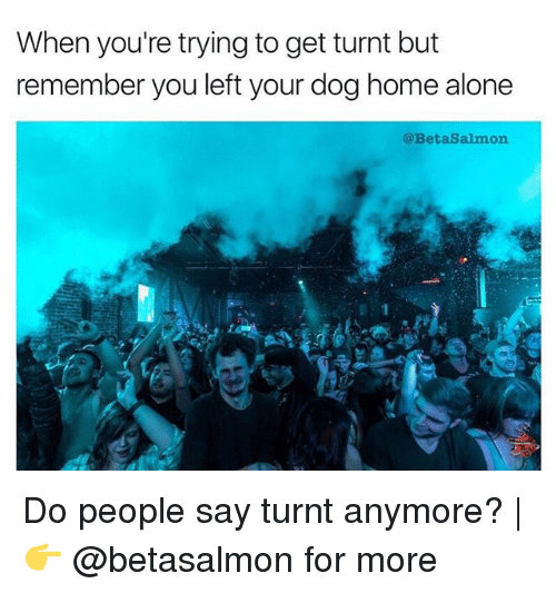 Being Alone, Home Alone, and Memes: When you're trying to get turnt but  remember you left your dog home alone  @BetaSalmon Do people say turnt anymore? | 👉 @betasalmon for more