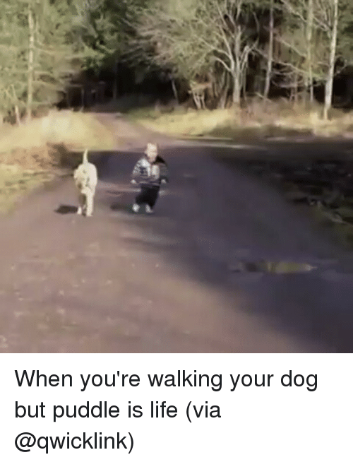 Life, Memes, and 🤖: When you're walking your dog but puddle is life (via @qwicklink)