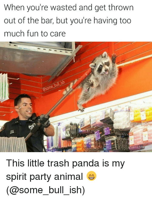 Memes, 🤖, and Pandas: When you're wasted and get thrown  out of the bar, but you're having too  much fun to care  @some-  po This little trash panda is my spirit party animal 😁 (@some_bull_ish)