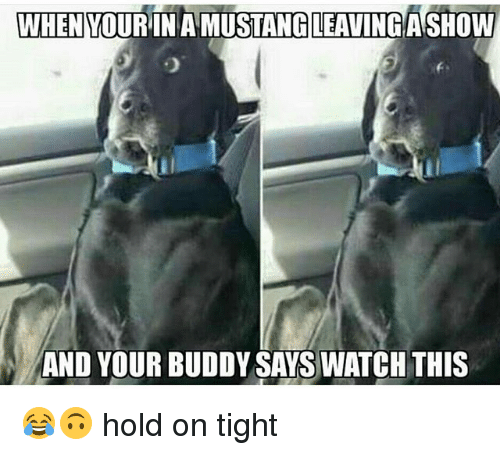 hold on tight: WHEN YOURINAMUSTANG LEAVING ASHOW  AND YOUR BUDDY SAYS WATCH THIS 😂🙃 hold on tight