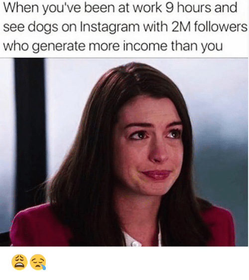 Generate: When you've been at work 9 hours and  see dogs on Instagram with 2M followers  who generate more income than you 😩😪