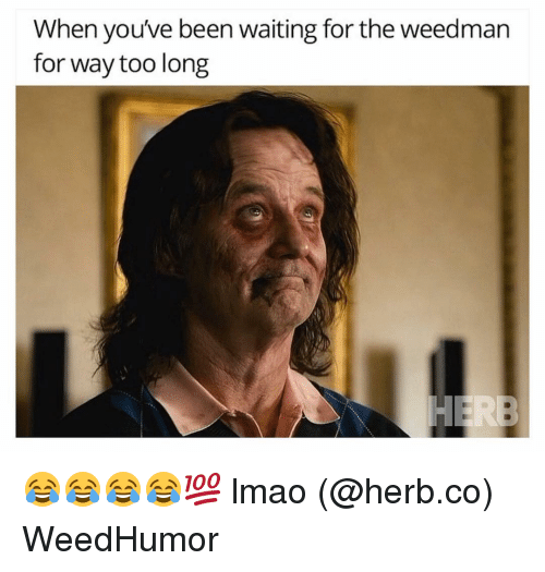 Lmao, Dank Memes, and Waiting...: When you've been waiting forthe weedman  for way too long 😂😂😂😂💯 lmao (@herb.co) WeedHumor