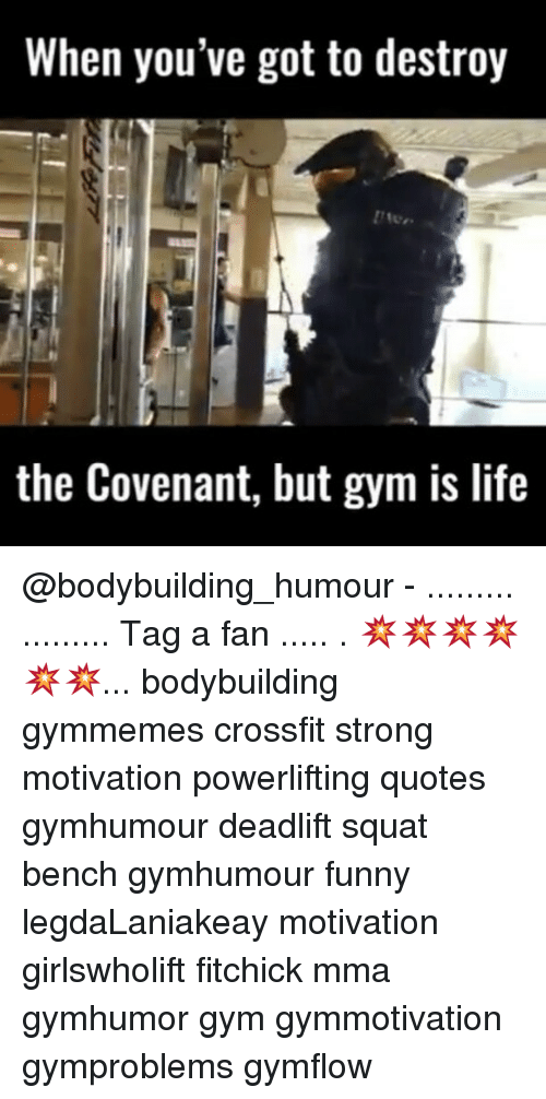 Memes, Crossfit, and Mma: When you've got to destroy  the Covenant, but gym is life @bodybuilding_humour - ......... ......... Tag a fan ..... . 💥💥💥💥💥💥... bodybuilding gymmemes crossfit strong motivation powerlifting quotes gymhumour deadlift squat bench gymhumour funny legdaLaniakeay motivation girlswholift fitchick mma gymhumor gym gymmotivation gymproblems gymflow
