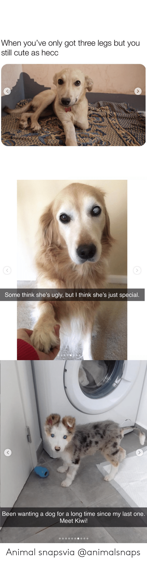 kiwi: When you've only got three legs but you  still cute as hecc   Some think she's ugly, but I think she's just special.   Been wanting a dog for a long time since my last one  Meet Kiwi! Animal snapsvia @animalsnaps