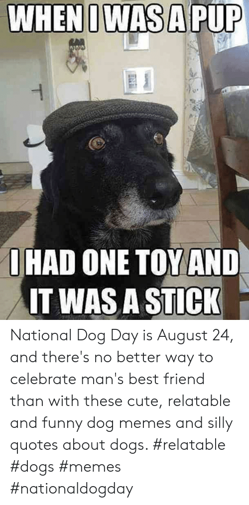 Silly Quotes: WHENIWAS A PUP  RAD  O HAD ONE TOY AND  IT WAS A STICK  T National Dog Day is August 24, and there's no better way to celebrate man's best friend than with these cute, relatable and funny dog memes and silly quotes about dogs.  #relatable #dogs #memes #nationaldogday