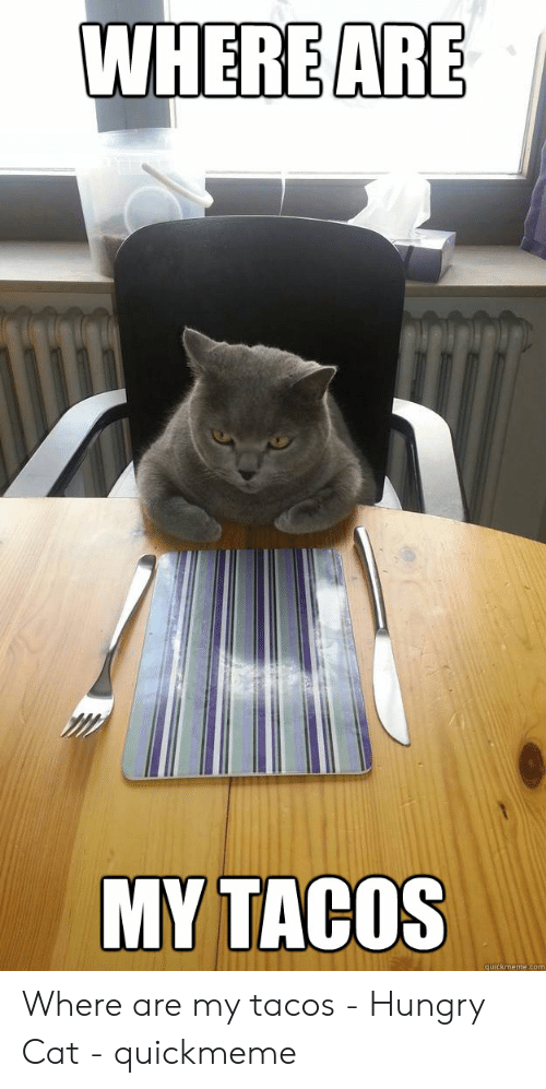 Funny Hungry Memes: WHERE ARE  MY TACOS  quickmeme.com Where are my tacos - Hungry Cat - quickmeme