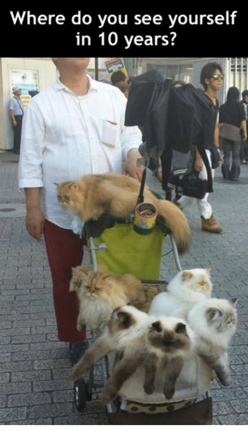 where do you see yourself in five years