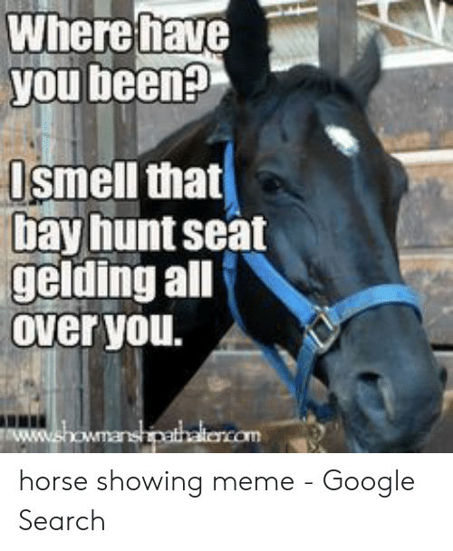 Google Search: Where fhave  you been?  Ismell that  bay hunt seat  gelding all  Over you.  ww.showmanshipathalencom horse showing meme - Google Search
