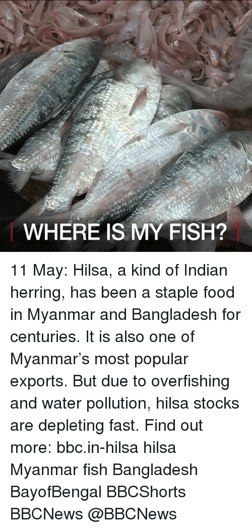 myanmar: WHERE IS MY FISH? 11 May: Hilsa, a kind of Indian herring, has been a staple food in Myanmar and Bangladesh for centuries. It is also one of Myanmar's most popular exports. But due to overfishing and water pollution, hilsa stocks are depleting fast. Find out more: bbc.in-hilsa hilsa Myanmar fish Bangladesh BayofBengal BBCShorts BBCNews @BBCNews