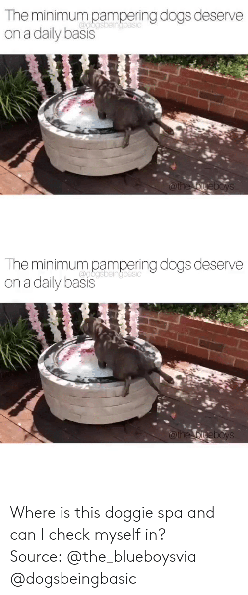 Can I: Where is this doggie spa and can I check myself in?Source: @the_blueboysvia @dogsbeingbasic