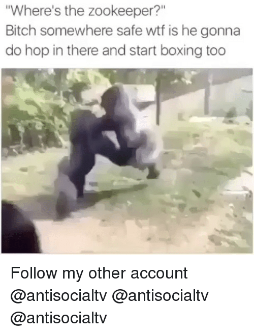 "Bitch, Boxing, and Memes: Where's the zookeeper?""  Bitch somewhere safe wtf is he gonna  do hop in there and start boxing too Follow my other account @antisocialtv @antisocialtv @antisocialtv"