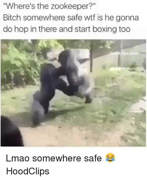 "Bitch, Boxing, and Funny: ""Where's the zookeeper?""  Bitch somewhere safe wtf is he gonna  do hop in there and start boxing too  laodclips.com Lmao somewhere safe 😂 HoodClips"