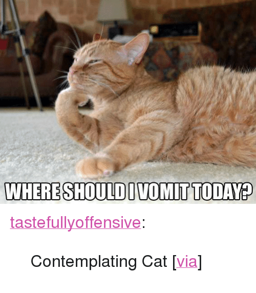 "Thinking Cat: WHERESHOULDIVOMITTODAY? <p><a class=""tumblr_blog"" href=""http://tumblr.tastefullyoffensive.com/post/54016112225/contemplating-cat-via"" target=""_blank"">tastefullyoffensive</a>:</p> <blockquote> <p>Contemplating Cat [<a href=""http://www.reddit.com/r/funny/comments/1h44tw/thinking_cat_is_thinking/"" target=""_blank"">via</a>]</p> </blockquote>"