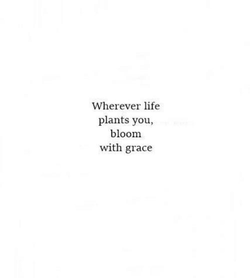 grace: Wherever life  plants you,  bloom  with grace