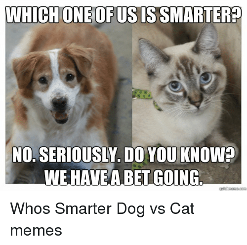 Which One Is Smarter Cats Or Dogs